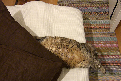 Kissa tyynyvyöryn alla